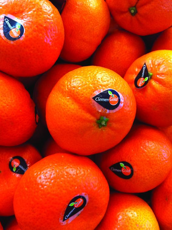 NEWS citrus CLEMENGOLD
