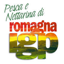 The peach and the nectarine of Romagna, produced only in the typical area that covers the provinces of Forlì-Cesena, Ravenna, Ferrara and Bologna, are the only ones that can boast about PGI brand, the European recognition, that guarantees their uniqueness and emphasizes the close link with the territory of origin, which for its special environmental characteristics and for the historical tradition of the producers, allows to obtain qualitative levels of excellence.