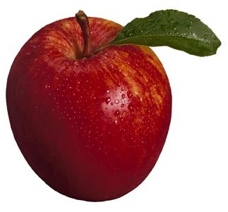 Recent survey results show that as of November 1, this year's fresh apple holdings in in the United States totalled 117.3 million bushels, down 19% from the record inventories reported of 145.6 million bushels at the same time last year, and 1% above the five-year average of 115.7 million bushels.