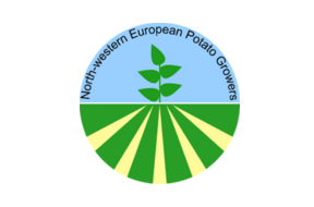 The estimate for the NEPG (North Western European Potato Growers) crop has been raised by 300,000 tons on that of early October and now stands at nearly 25.16 million tons of consumption potatoes.