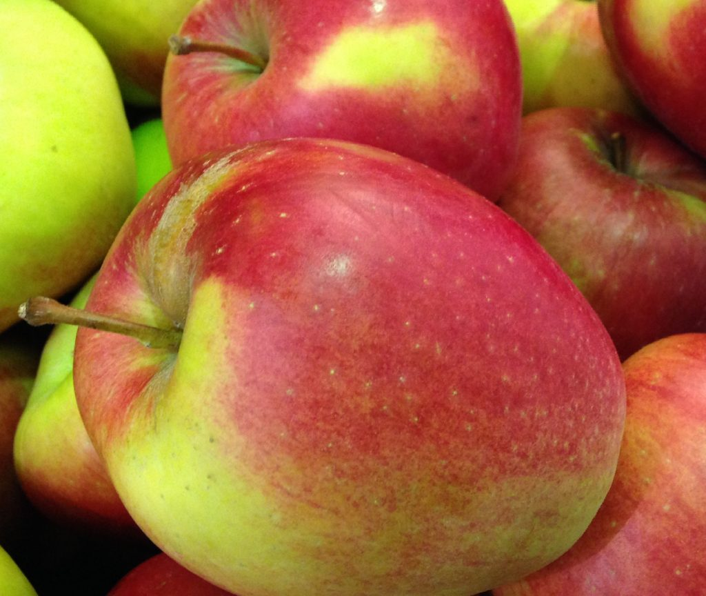 Many Canadian apple growers have adopted a new variety strategy as a way to improve profitability, as new varieties tend to sell at a premium price and have gained significant consumer appeal,
