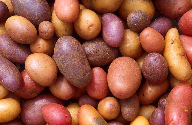The 13 major potato states in the United States held 197 million cwt of potatoes in storage February 1, 2016, down 2 percent from February 1, 2015.