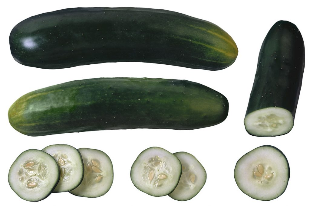 """The key to the improved fruit shelf life, is mutation of the """"stay green gene"""" in the cucumber plant"""