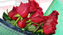 Lufthansa Cargo is currently flying in entire freighters filled with roses, mainly from Kenya & South America, ready for Valentine's Day.