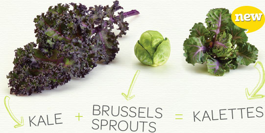 Tozer Seeds takes Kalettes®, their cross between Brussels sprouts and kale, across the pond to the US.