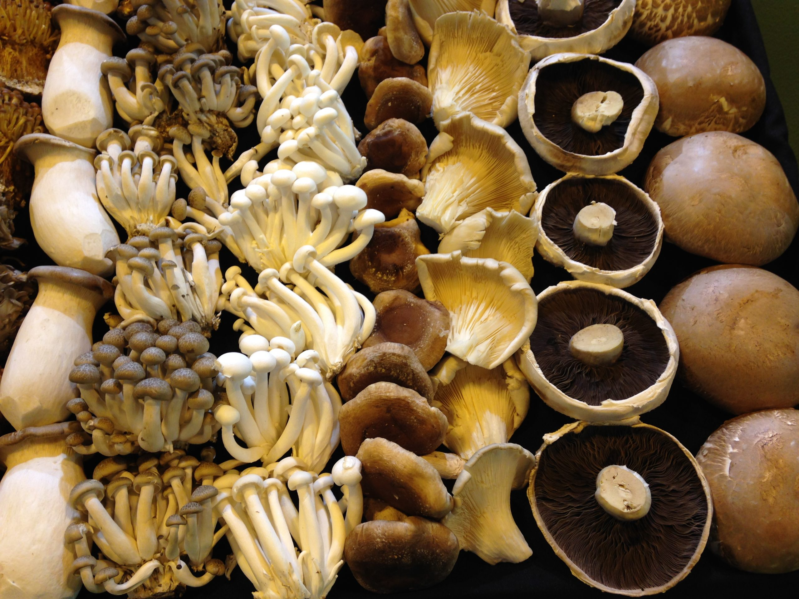 The EWG recommends that the Committee consider establishing an ML for lead in fungi and mushrooms (excluding dried fungi and mushroom and fungus products) of 0.3 mg/kg.