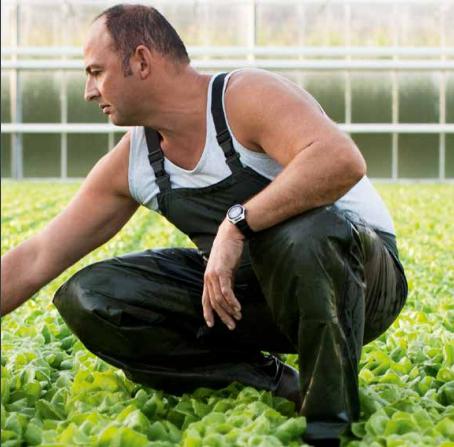 Belgium's early vegetable season has just burst into life.