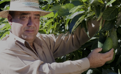 In 2014, Frutas Montosa sold 17,000 tons of avocado, 7,000 of mango and 1,500 tons of guacamole.