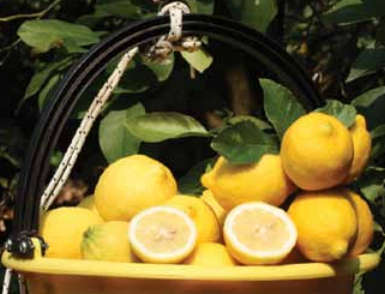 Battaglio Spa is a company specialising in fruit imports and distribution which imports, packs and distributes bananas, pineapples, apples, pears, citrus in Italy, as well as every other kind of fruit from various countries, depending on the different seasons.