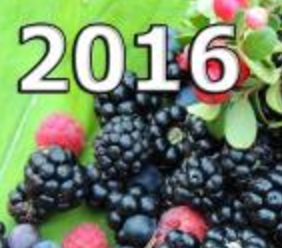 The finalised programme forthe 7th International Conference 'Berries of Ukraine-2016. Frozen Produce & Fresh Market'is now availableon theconference website: http://www.fruit-inform.com/en/conferences/berries2016/program.