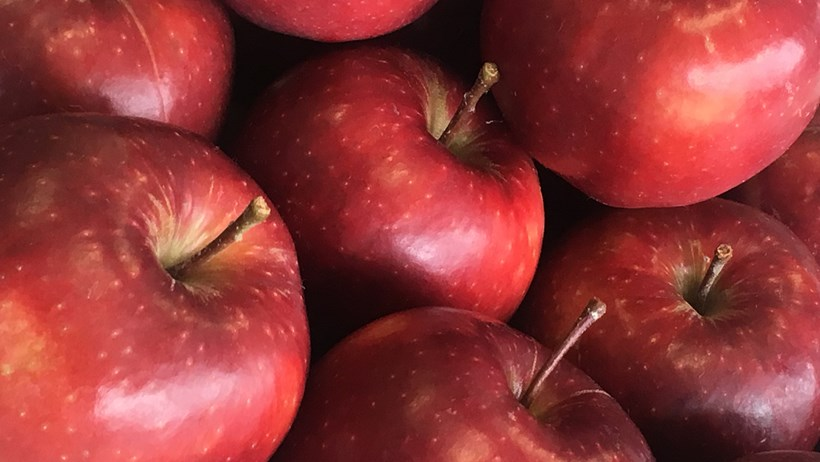 The Red Prince offers shoppers the superb taste of a high quality English apple - but in spring instead of autumn thanks to its unique structure and the latest storage technology.