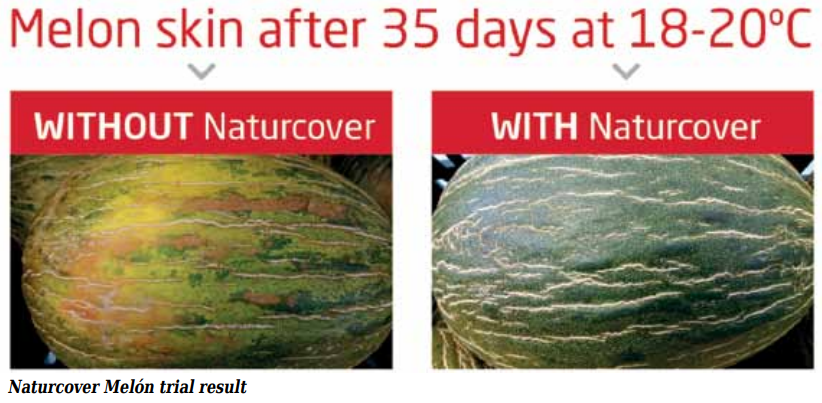 The market is increasingly demanding melons outside the months when they are harvested, so it is useful to be able to store them at the end of the season in order to sell them when there is no longer any crop in the field.