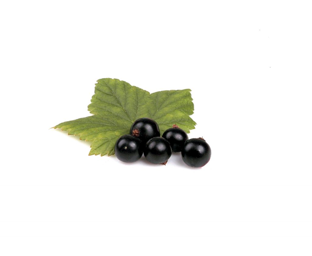Blackcurrants are also especially rich in Vitamin C - containing more than three times as much as an orange! They can even help prevent joint inflammation, eyestrain and urinary infections.