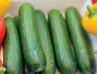 EU demand for cucumbers reached 1.27 million tons of import, for a total value of €1.1 billion and a 7% increase.