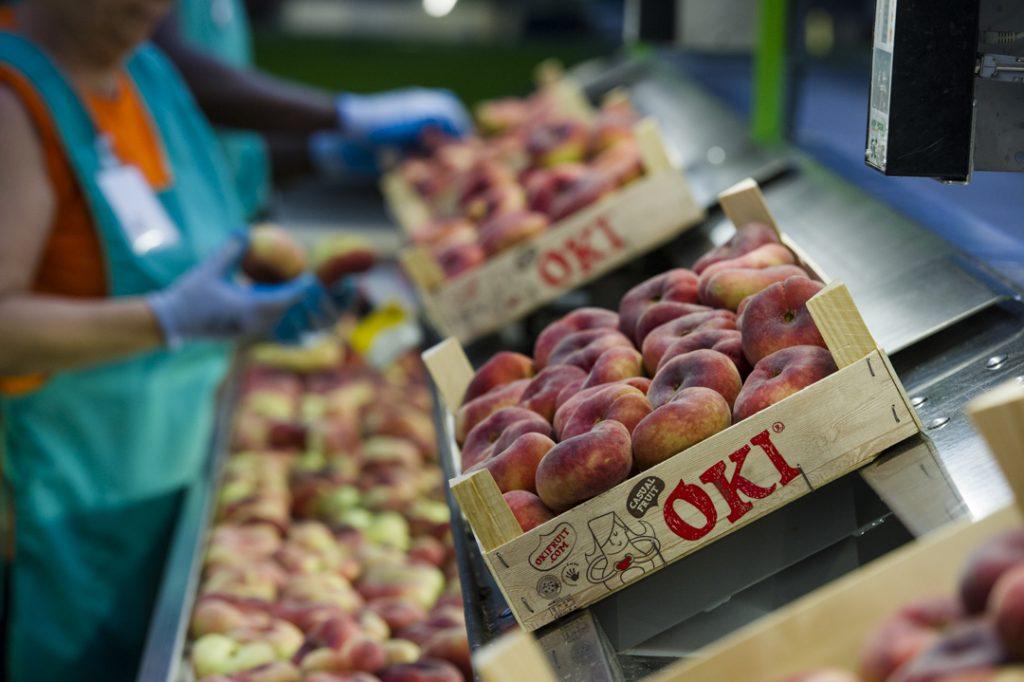 Fruits de Ponent rolled out its flat nectarine and flat peach campaign in June, with exclusive marketing rights to the OKI brand.