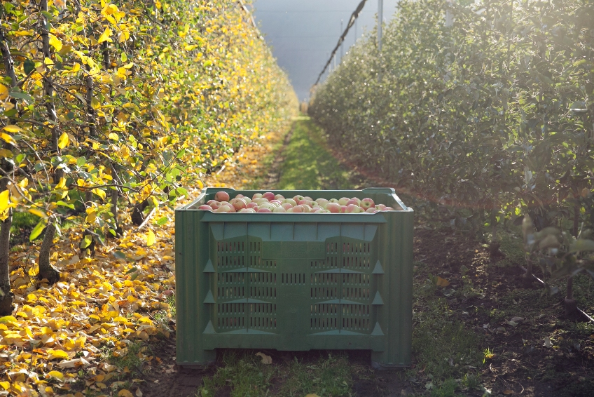 Apple industry members at Interpoma 2016 will discuss how to address situations like the continuation of the Russian embargo, which has almost completely cut trade ties with Western Europe, and the dynamics that various traditional markets are undergoing, where the new generations have definitely reduced their demand for apples.