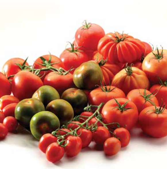 Exports to France and the Netherlands have shown an increase over the last 4 years, whereas sales to Germany – although still a considerable partner – and the Czech Republic have slumped, while Belgian tomato exports to the UK have remained stable.