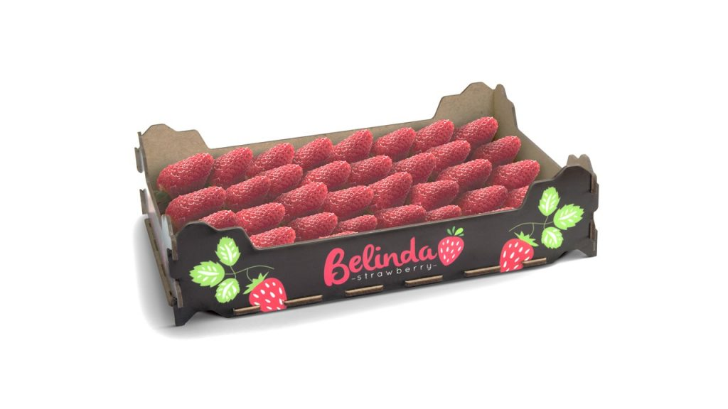 French company Sofruce is launching a superior quality strawberry brand this season.