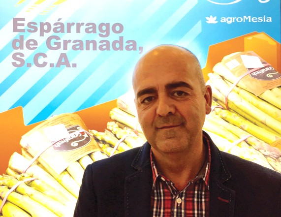 Espárrago de Granada's main market is Germany, followed by Denmark, Sweden, the Netherlands and Poland. The latter has been on the rise for the past two years and is increasingly demanding more produce.