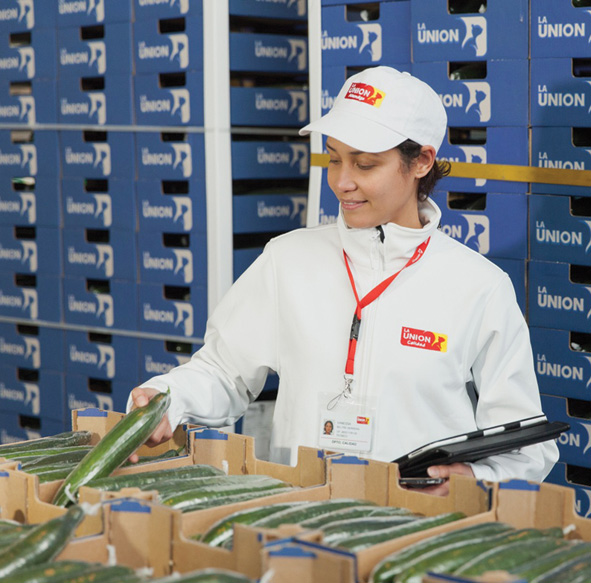 Alhóndiga La Unión was set up in 1993 to work with employees, suppliers and customers to achieve greater profitability for farmers, providing the consumer with produce that meets the highest food safety standards