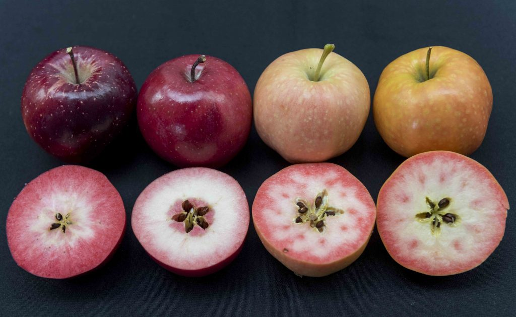 Ifored presented three new red-fleshed apple varieties at Fruit Attraction 2016.
