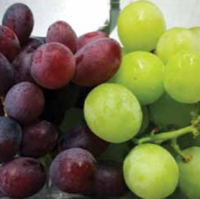 Many of the Italian growers' new plantings are of the seedless variety but Italian seeded grapes continue to be synonymous with quality and tradition.
