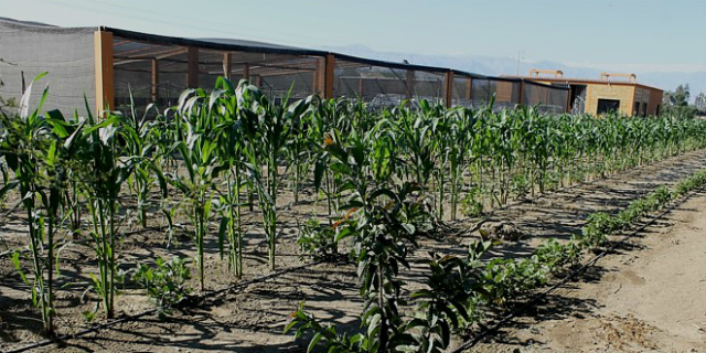 Sainsbury's Supports Sustainable Agriculture In The Peruvian Desert