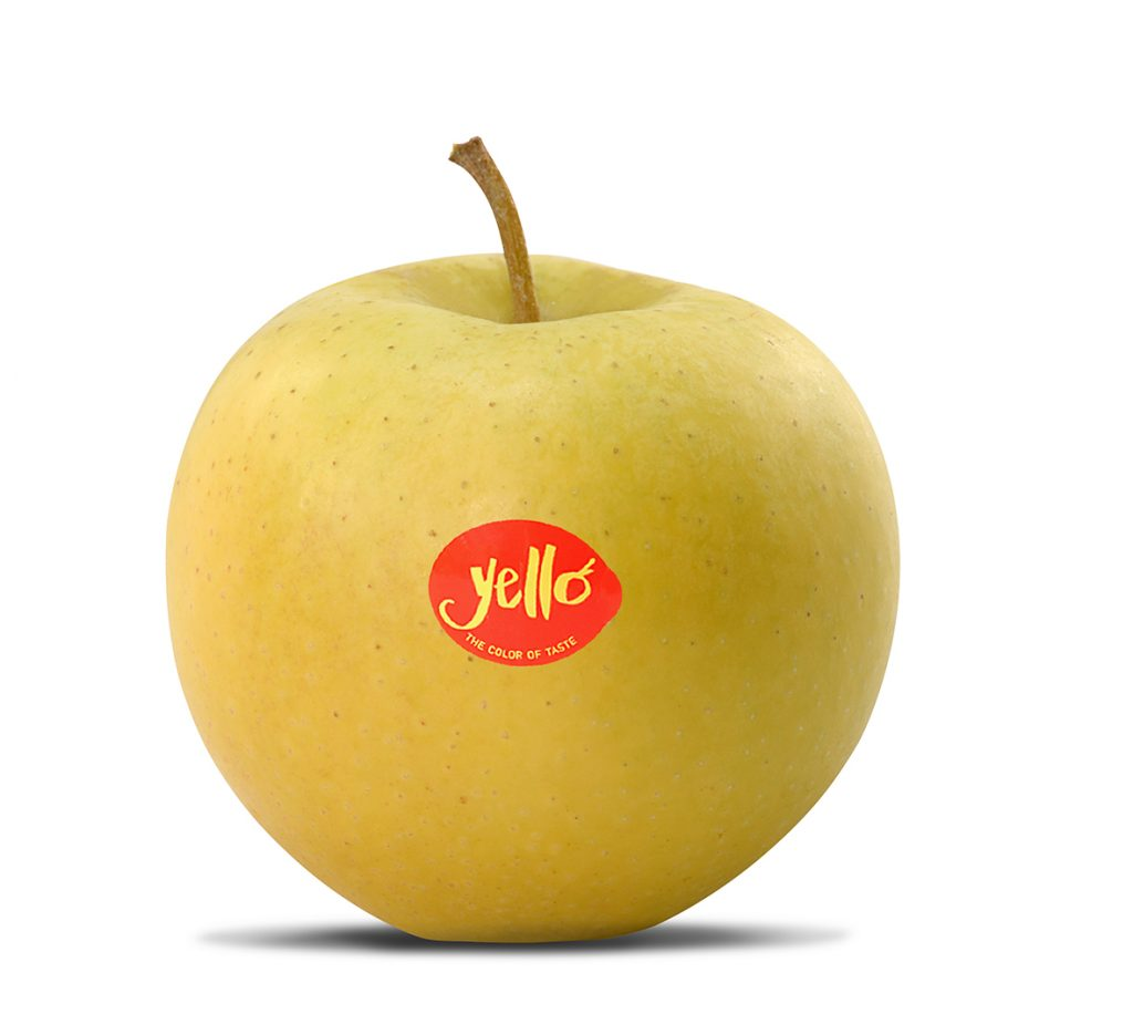 Created in Japan, exclusively harvested and marketed for Europe in Alto Adige - Südtirol, the new yellow apple Yello® made its world debut at Interpoma 2016 in Bolzano