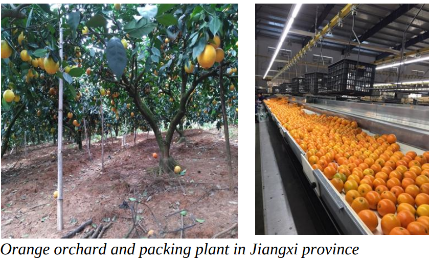 China's citrus imports are expected to continue to grow driven by consumer demand (especially in 1st tier cities) for high-quality and counter-seasonal fruit.