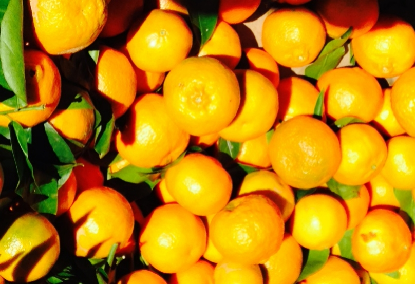 Australia's orange exports are expected to reach a record of 230,000 tons in 2016/17.