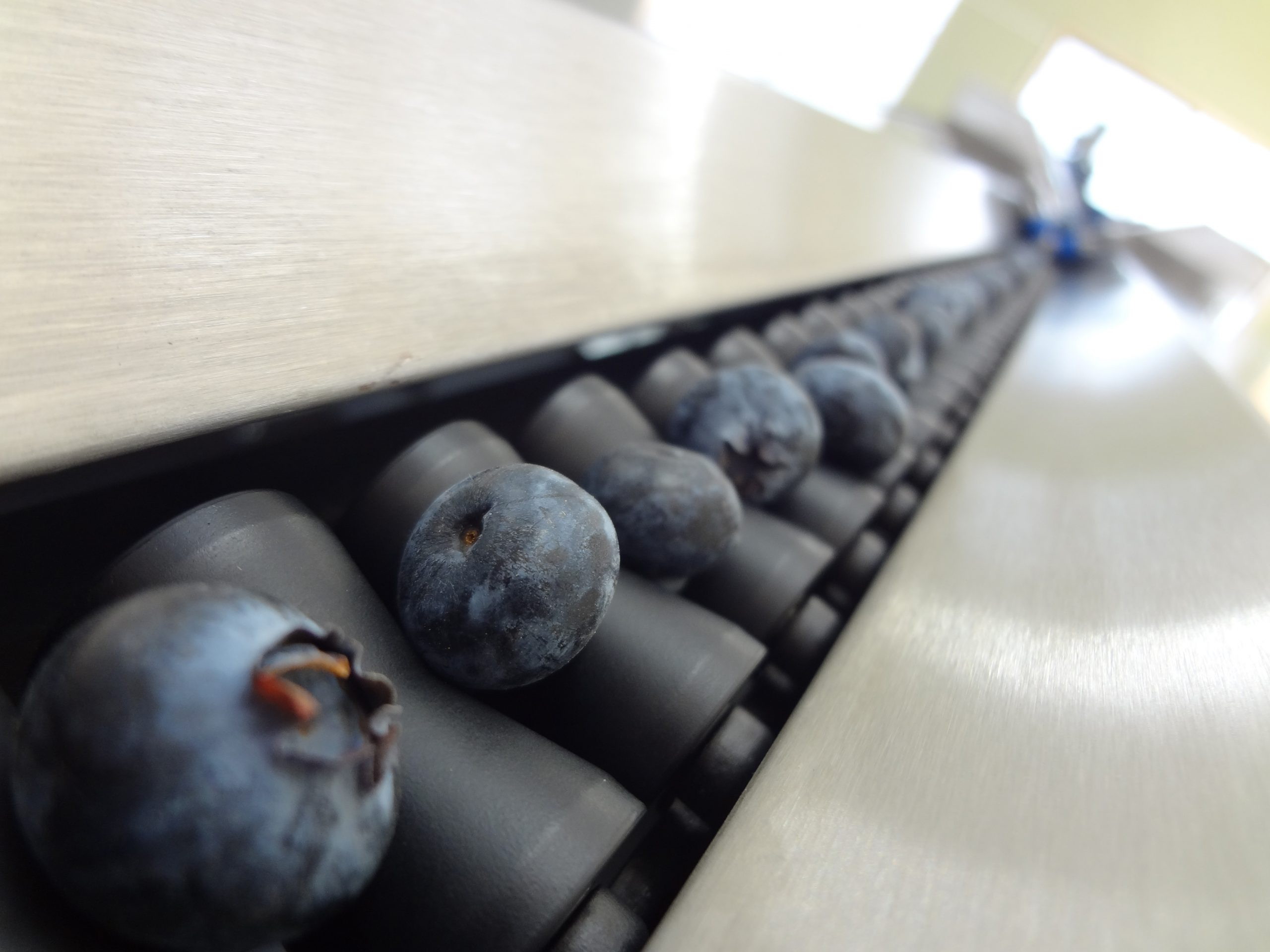 With the innovative patented Blueberry Vision Unitec Technology, fruit and vegetable pack-houses can obtain guarantees for the fruit quality selection and classification stage and always offer fruit with consistent quality over time to their Clients, ruling out the possibility of claims over fruit that fails to meet the agreed quality standards.