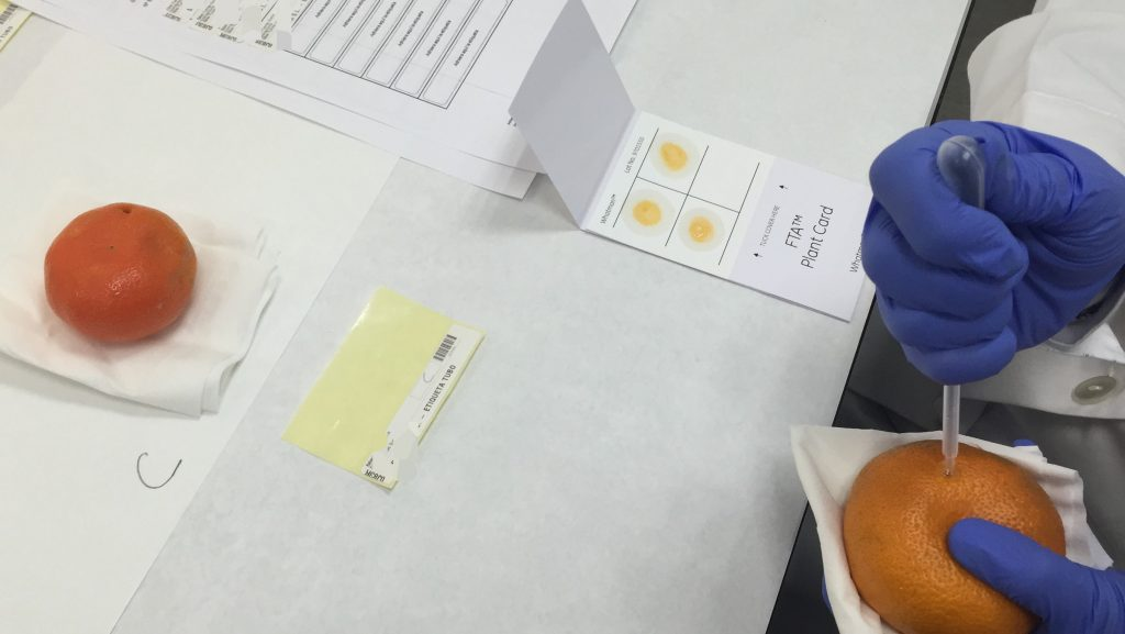 Eurosemillas collaborates with certifying bodies that are responsible for taking samples from supermarket and hypermarket shelves to verify their legal origin.