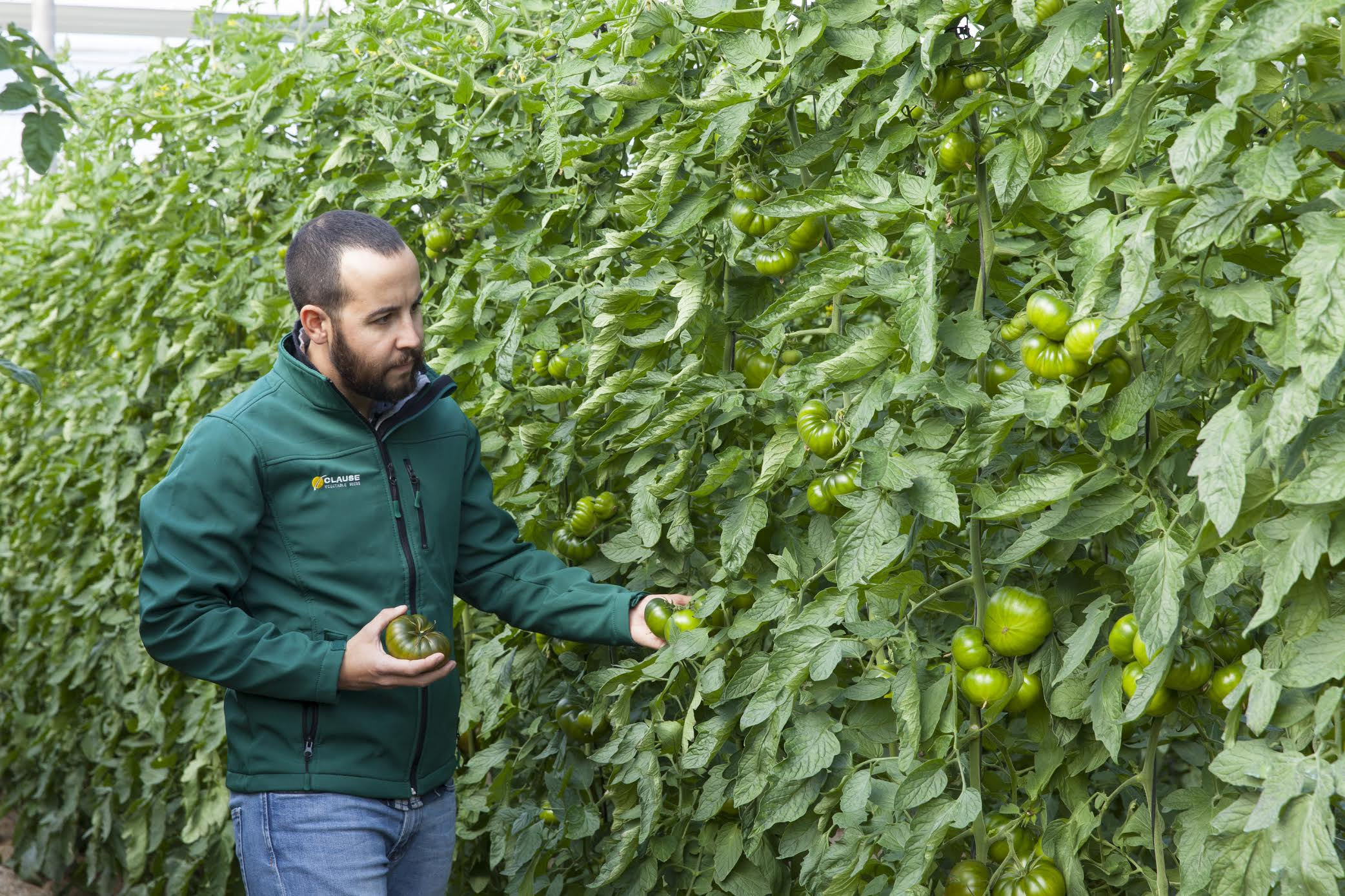 HM Clause launches this season of the cherry tomato varieties Saborini and Astuto, as well as a 'unique' variety of Marmande tomato