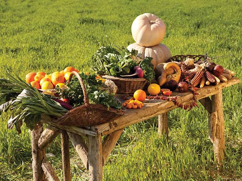 turkey organic food