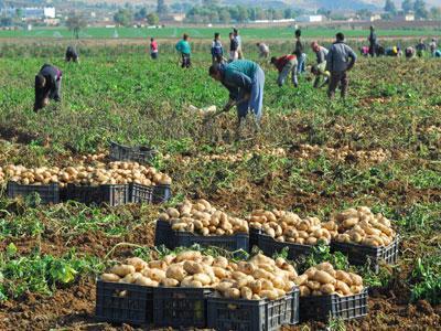 algeria-agriculture