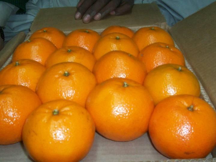 NEWS worldfood PAK WIMMO citrus & potatoes (1)