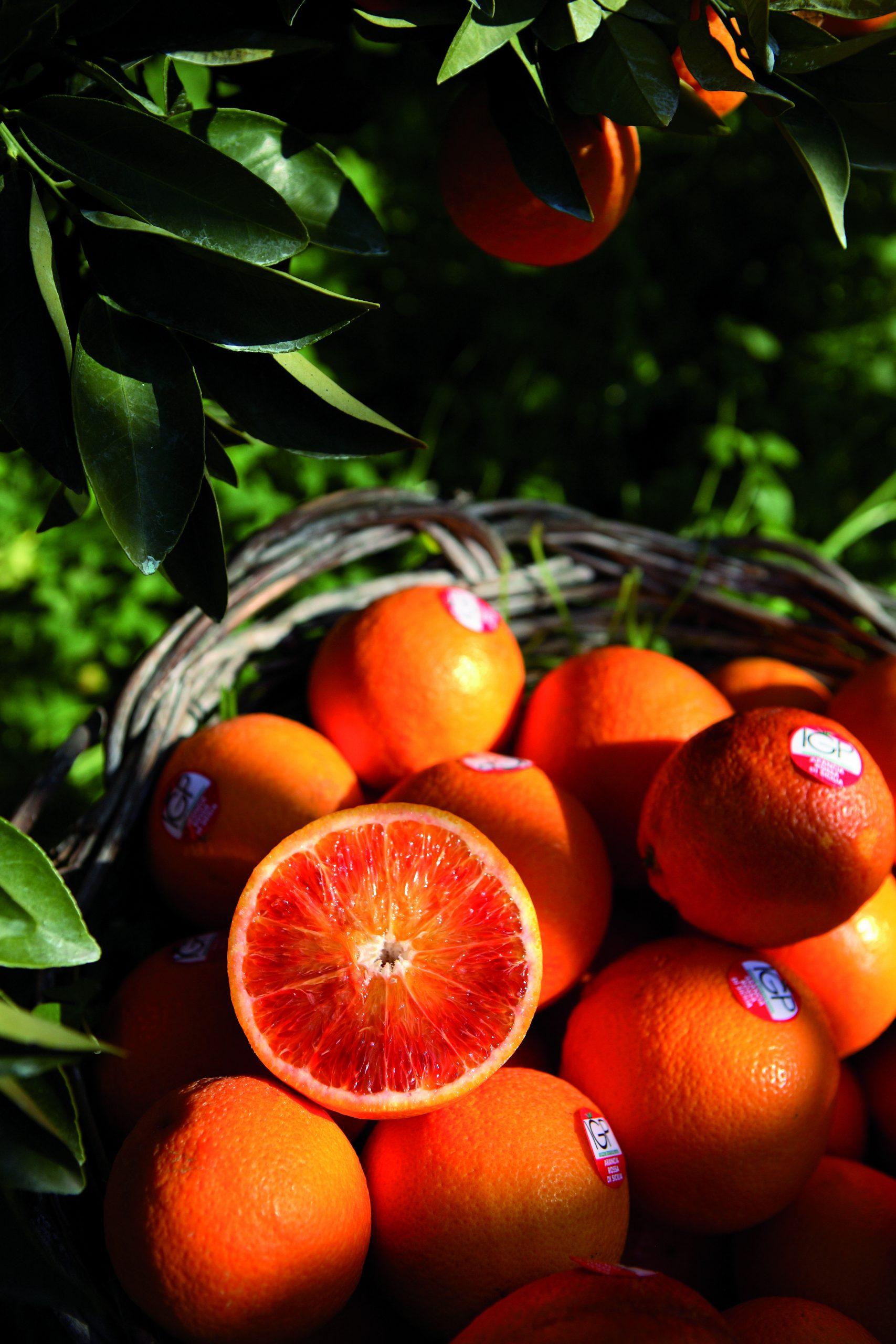 122cit igp arancia rossa