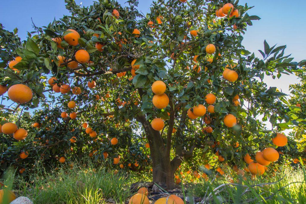 naranja italia