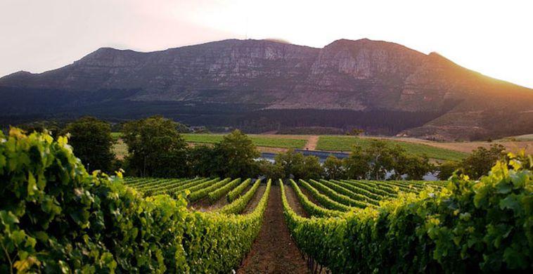 grape sudafrica