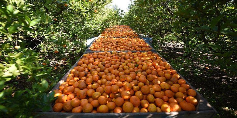 naranjas brasil