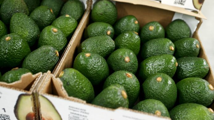 New Zealand avocado output to increase by 25%