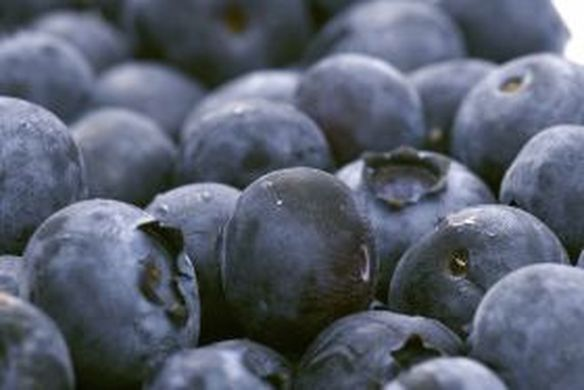 Bumper harvest for Chile's blueberry