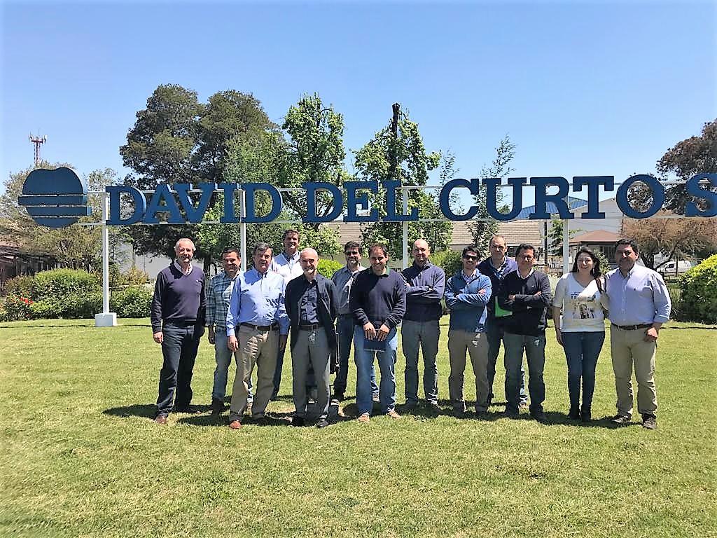 Sweeki kiwi from Chile to grow in quantity