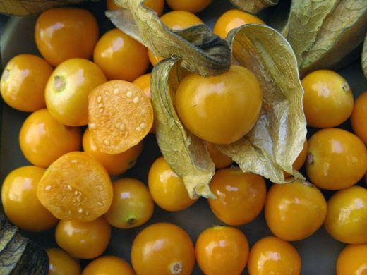 """Could groundcherry become """"the next blueberry""""?"""