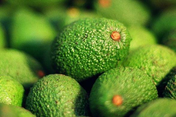 EU avocado prices to lower over the long-term