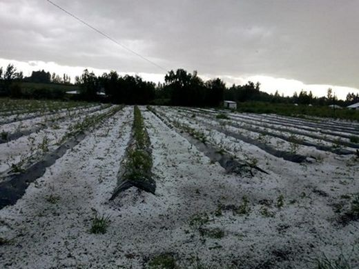 Chilean fruit industry counts cost of heavy storm damage