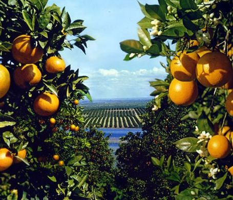 Chilean citrus exports to fall 3% in 2019