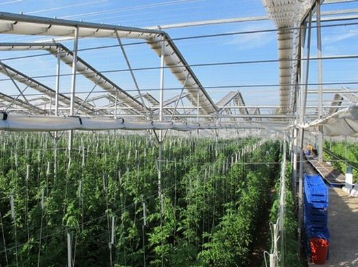 Hail and rain damage tomato and pepper greenhouses in Turkey