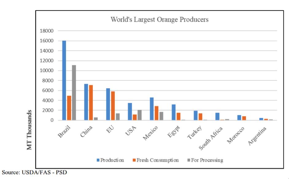 Egypt's orange exports climb 7%