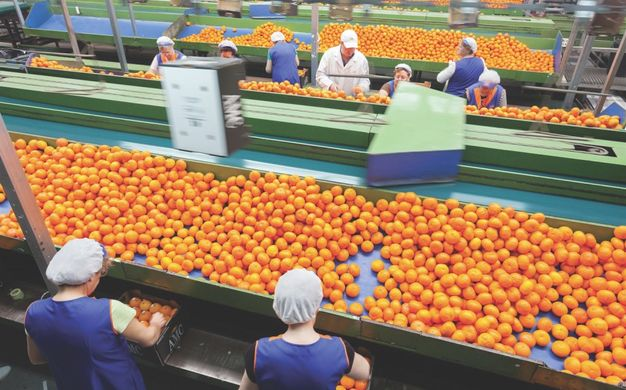 Spain's citrus sector calls for protests at low prices and unfair competition
